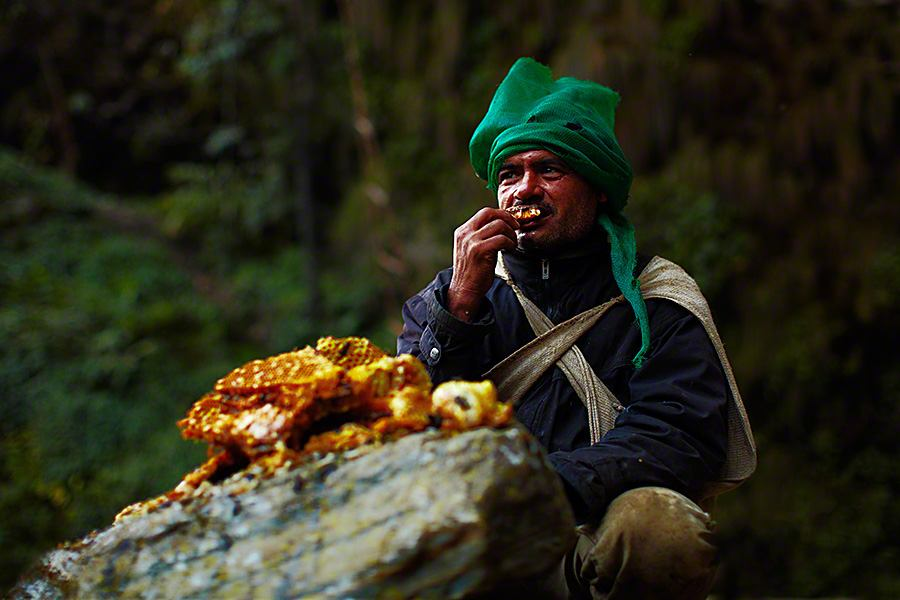 Honey-Hunter-0014.jpg