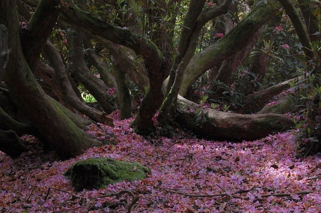 The Lost Gardens of Heligan 007